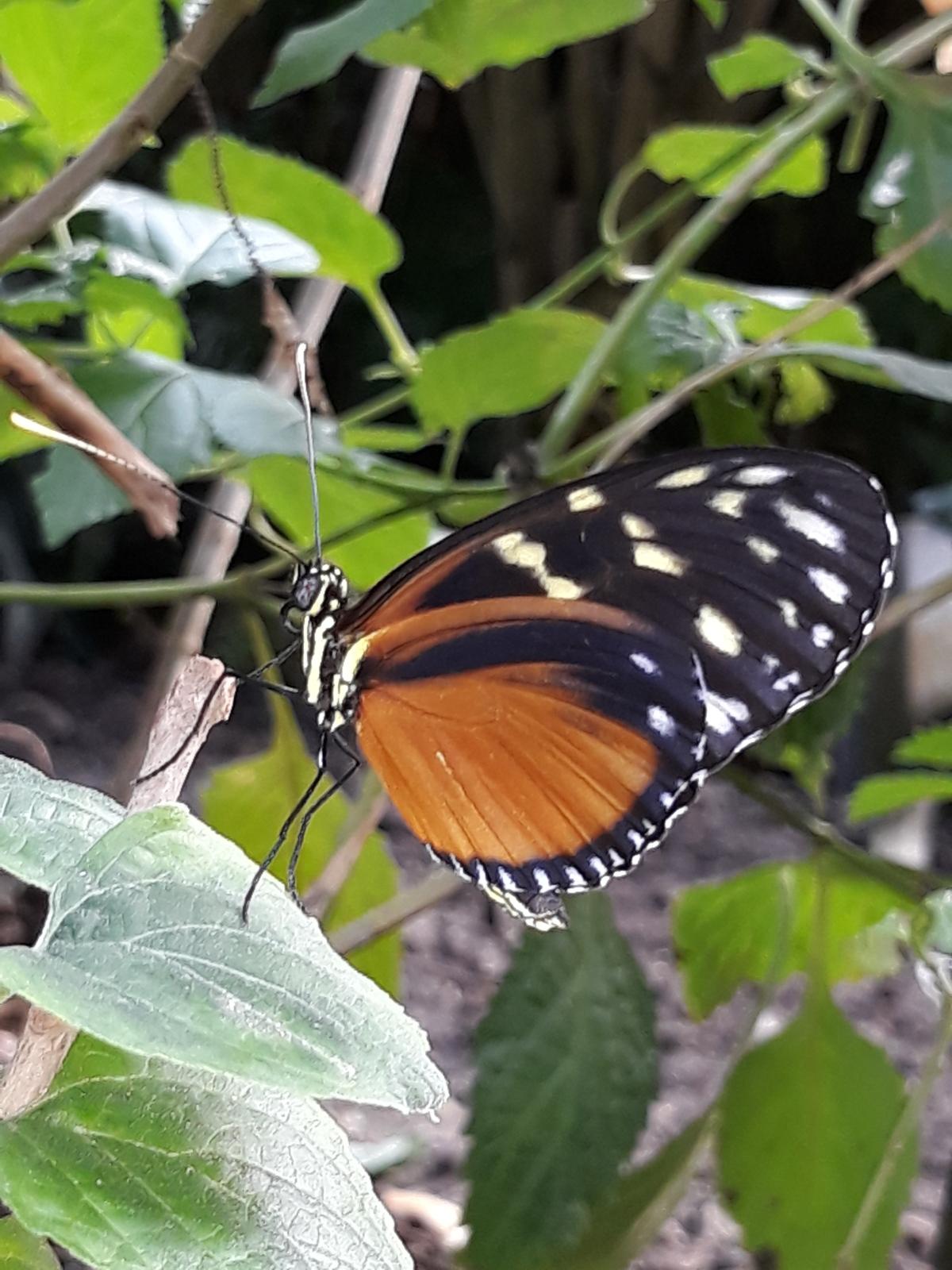 Top 10 Vlinderplanten volgens de Vlinderstichting