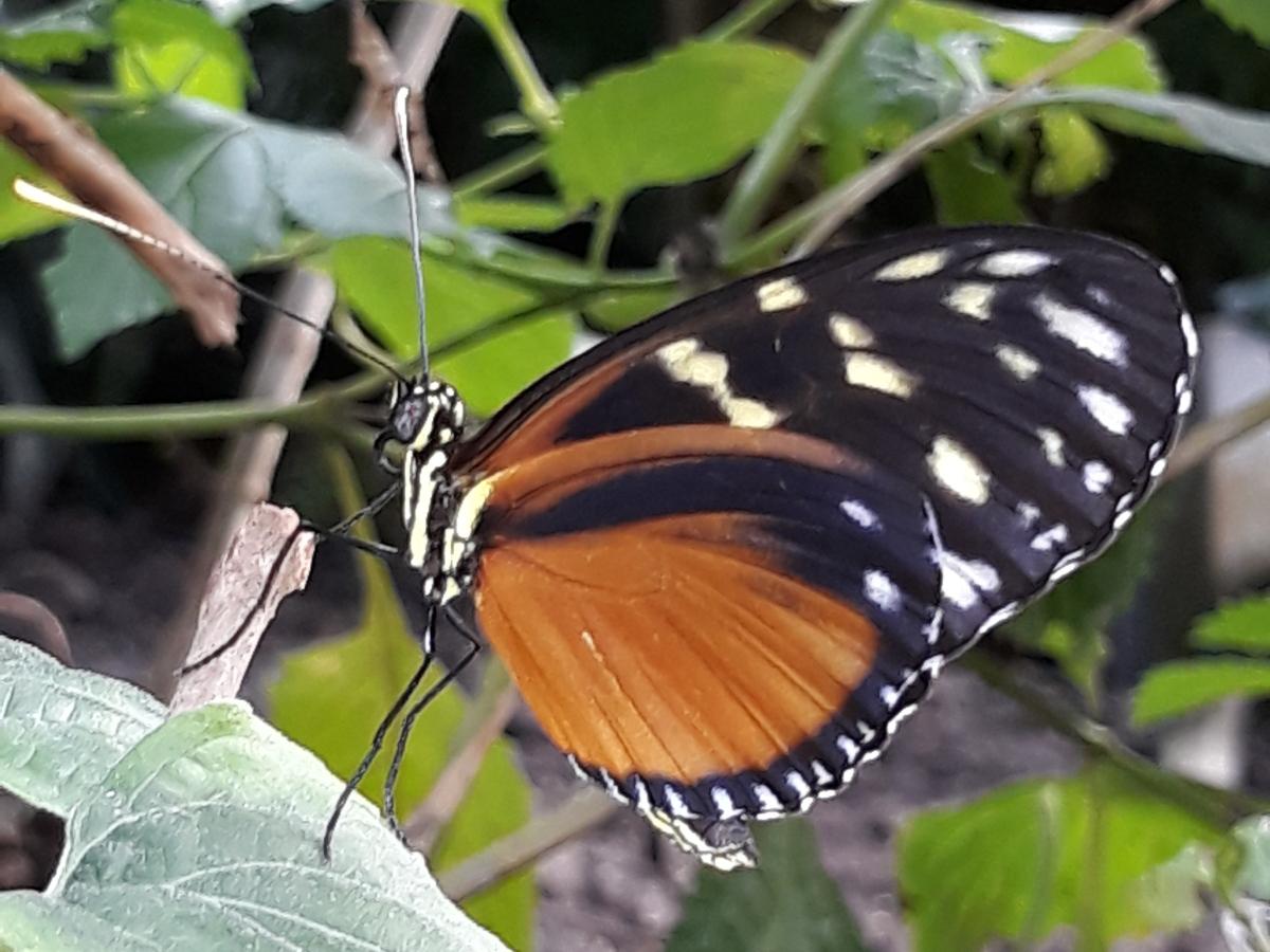 Top 10 vlinderplanten