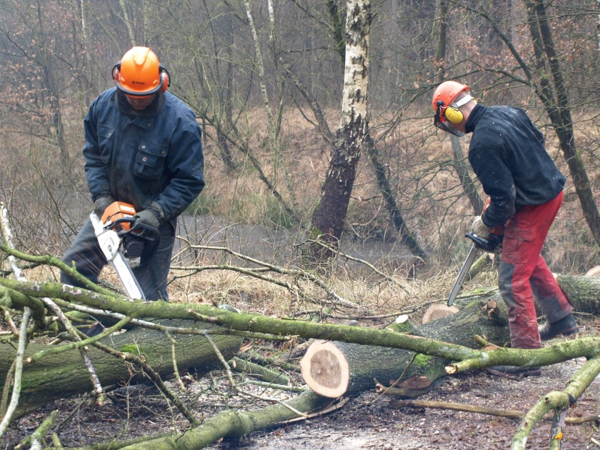 Huidig beleid van Natuurmonumenten m.b.t. het kappen van bomen.