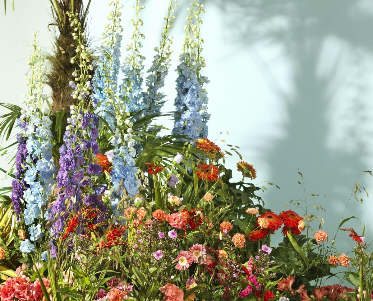 Zomer 2019: Bonte Bloementuin, Potzonnebloem voor vrolijke zomer en Nieuwe kleuren in detuin