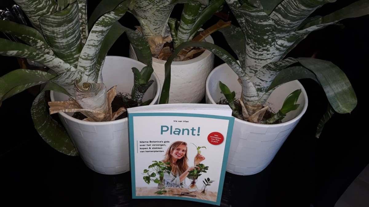 Plant! en plantenprentencadeau