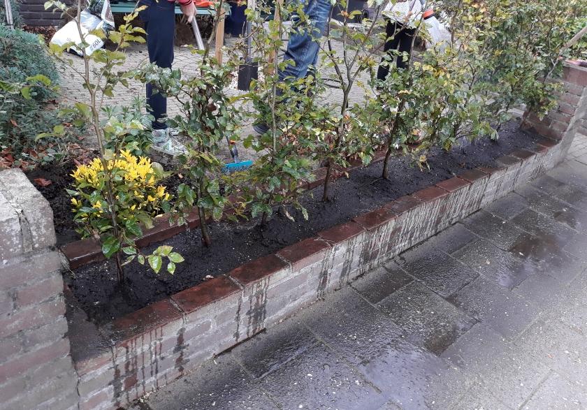 Aanplanten en verzorging van een nieuwe haag
