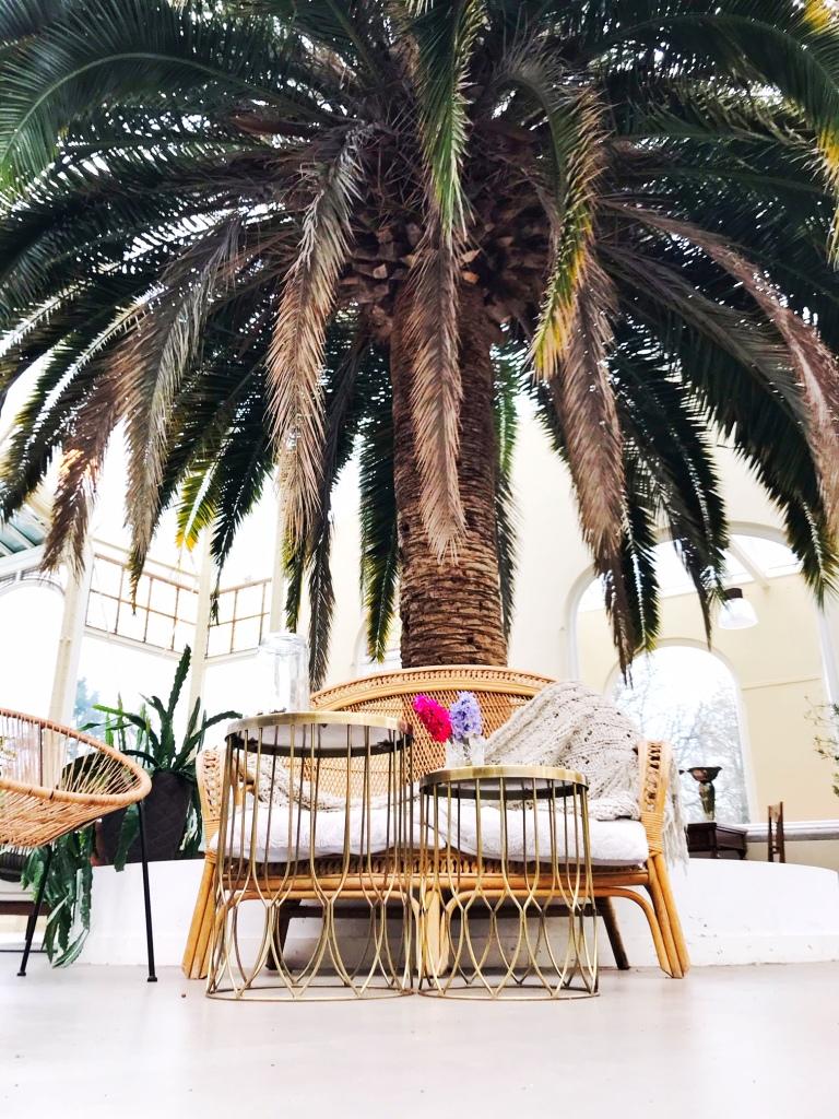 Grote palm centraal in de Botanische kas