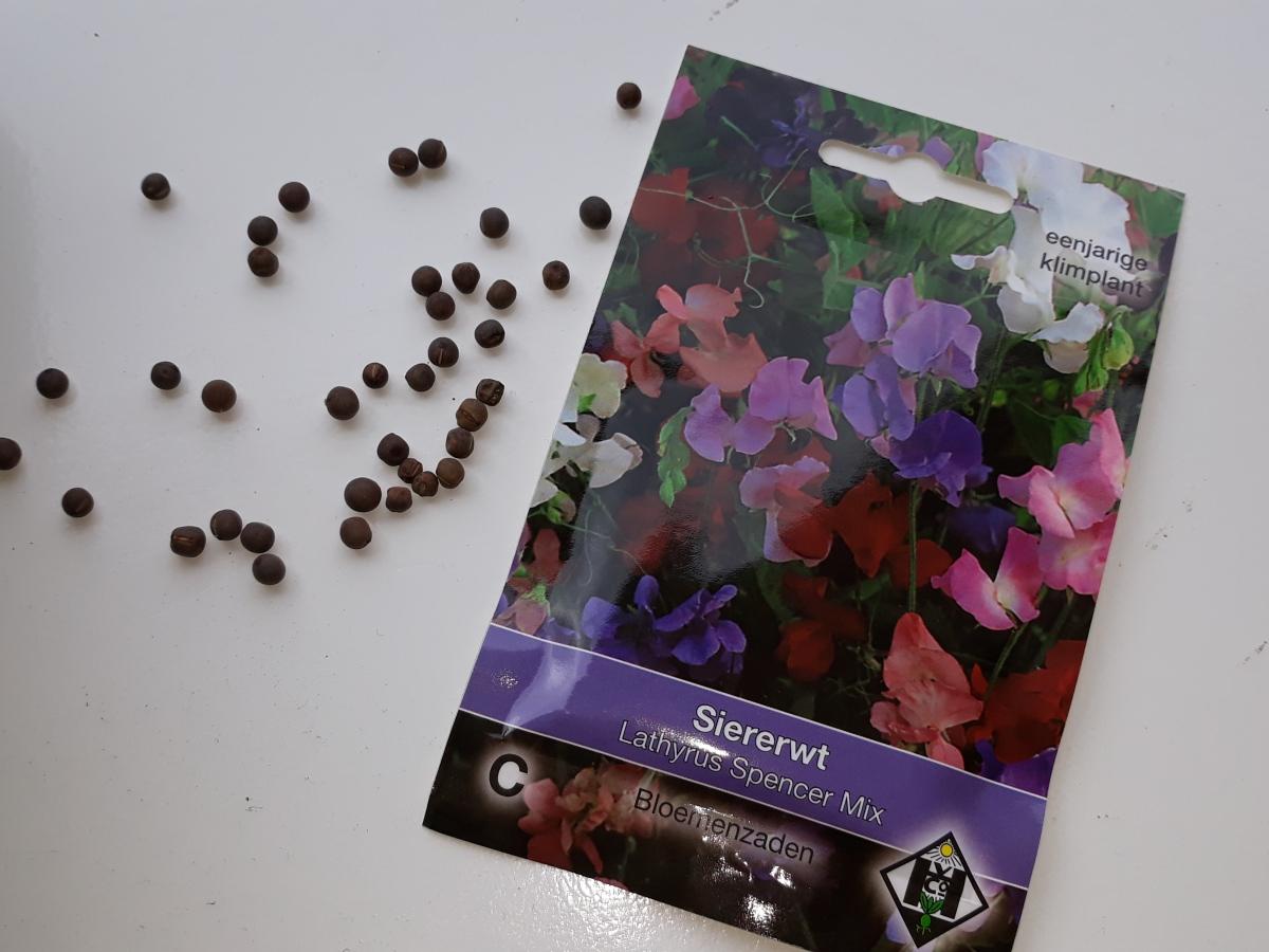Lathyrus zaad klimplant eenjarig