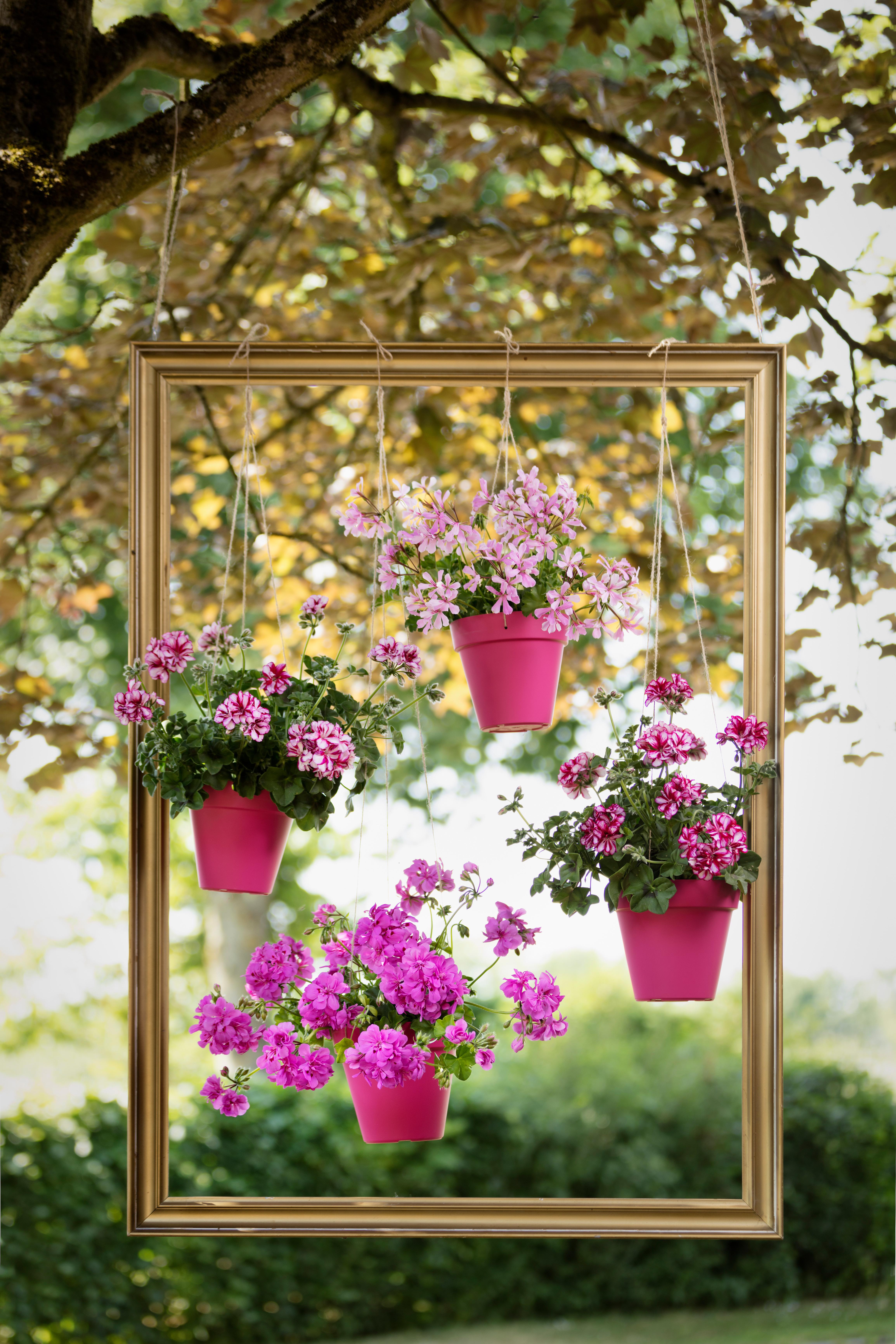 DIY Levend schilderij planten