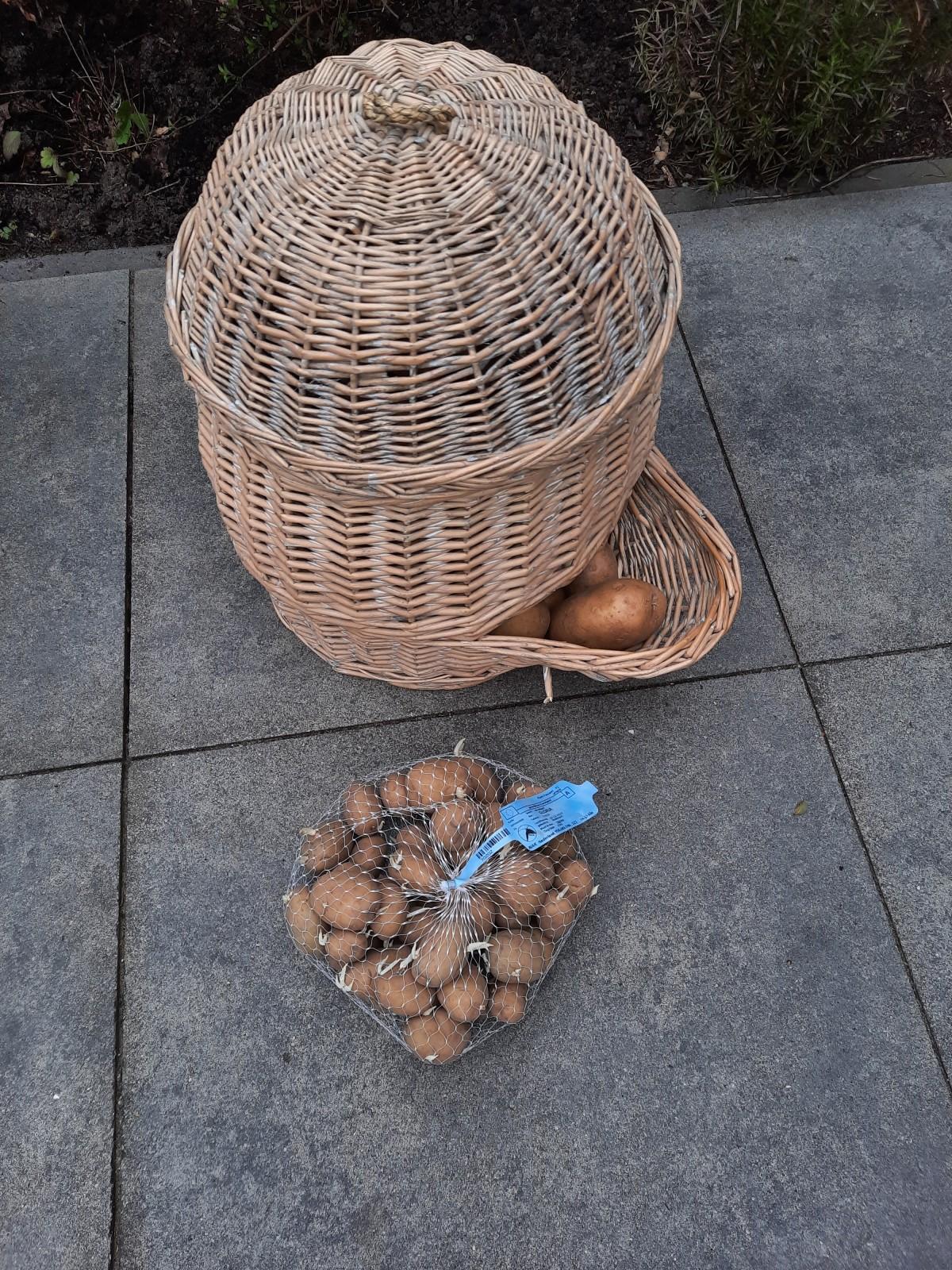 Aanpoten met aardappelen in hetvoorjaar