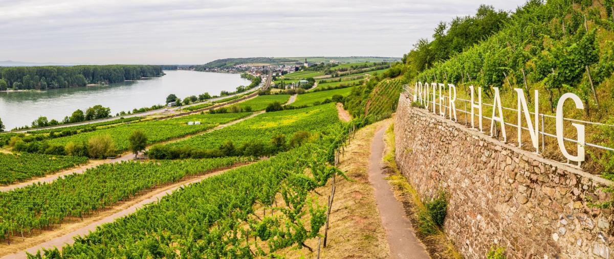 Drie fietsroutes door het prachtige wijnlandschap vanRheinhessen