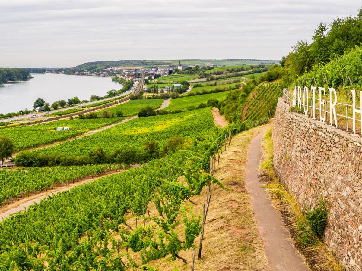 fietsroutes wijnlandschap Rheinhessen